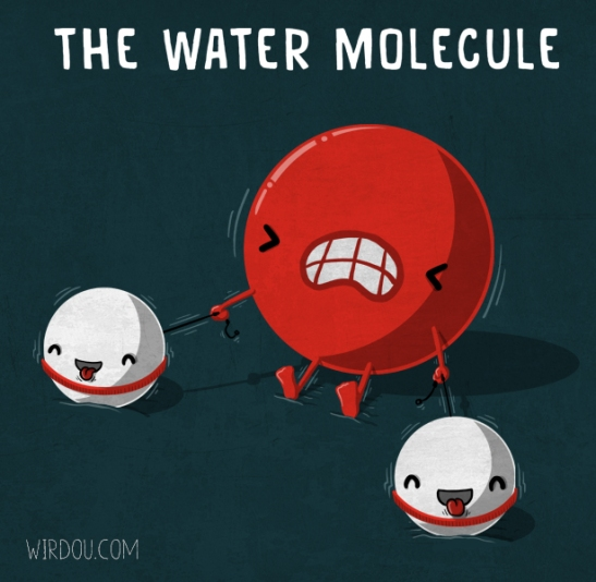 the-water-molecule
