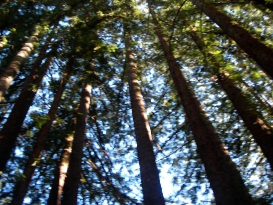 forest sun shade